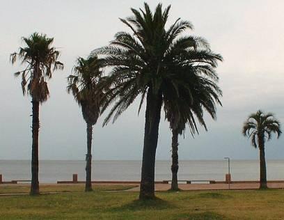 Montevideo: der Rio de La Plata vor der  Altstadt - el Río de La Plata en frente de la  ciudad vieja
